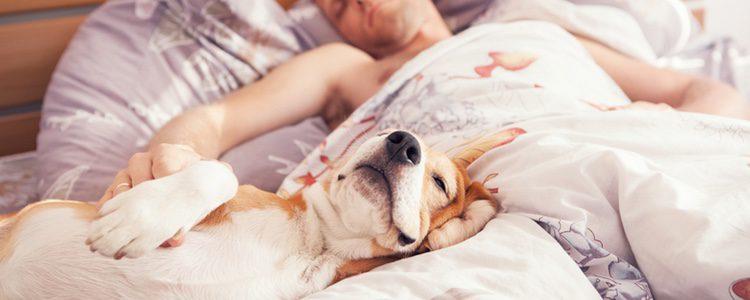 Evita las complicaciones desde que es un cachorro