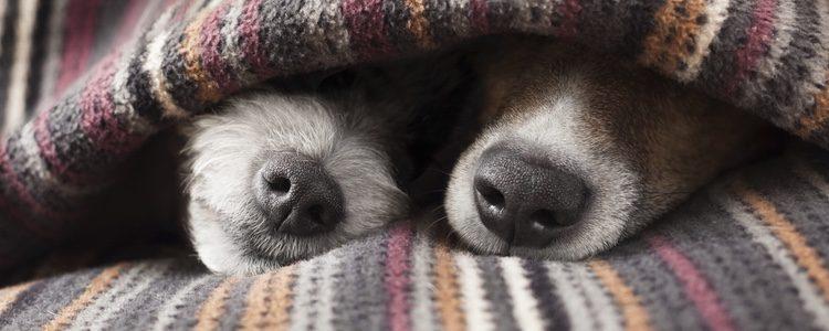 No es recomendable dormir con tu perro por posibles enfermedades