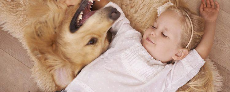 Procura que tu perro aprenda desde pequeño a dormir solo