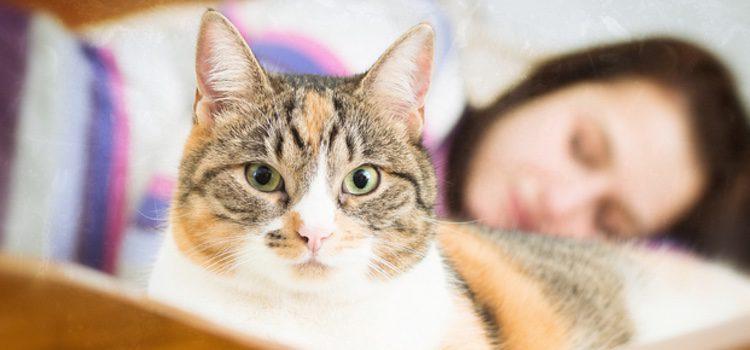 Al dormir con tu gato deberás dejar la puerta abierta por si necesita comer, beber o hacer sus necesidades