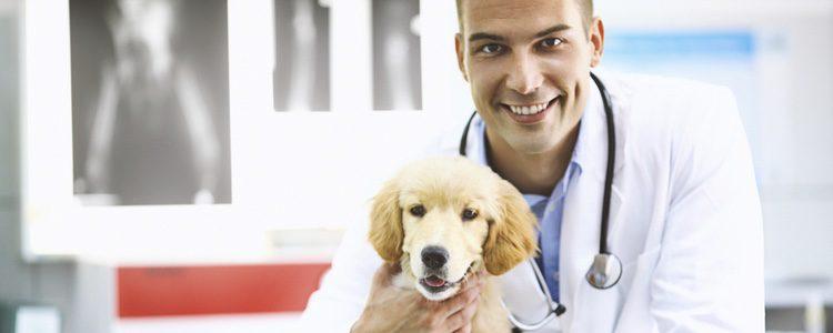 El veterinario debe recetar un tipo de alimentación más personal a tu mascota