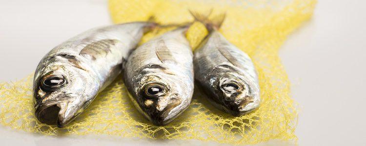 Comer pescado es muy importante para una dieta variada