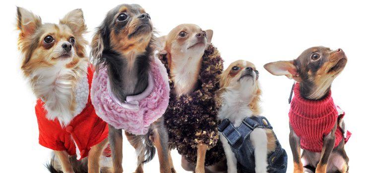 Hay algunos perros que por el grosor de su piel no es recomendable que lleven ropa