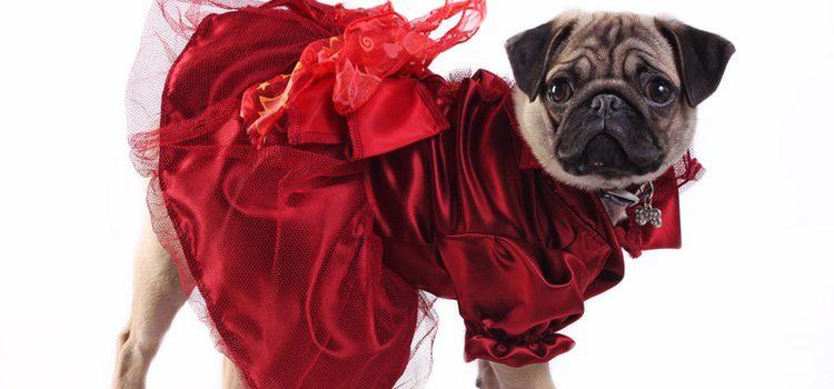 La vestimenta en perros intenta humanizarlos sin tener en cuenta que no  son personas