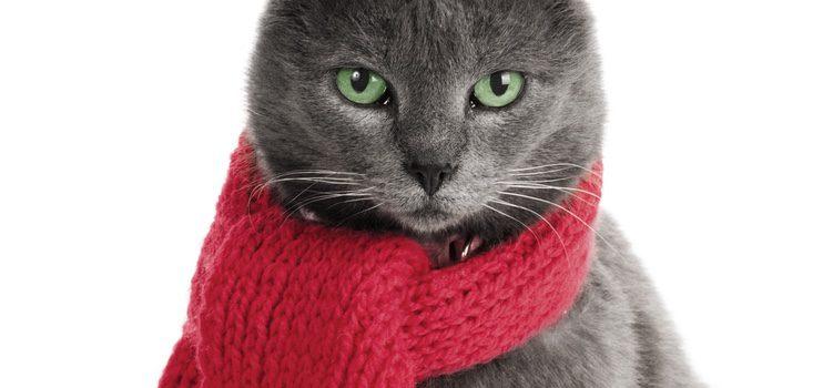 La cantidad de pelo que tenga tu gato determinará el frío que pase