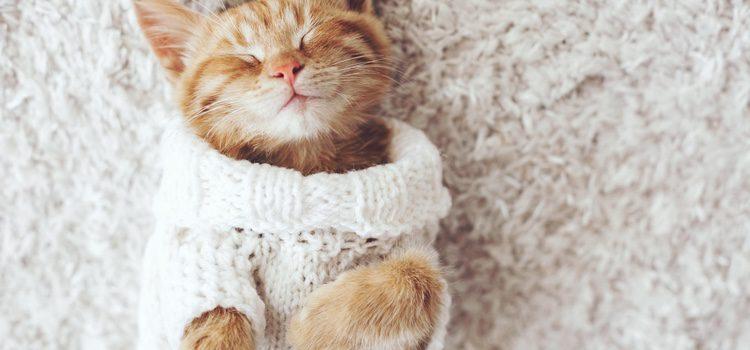 La ropa protege el pelo de nuestro gato de suciedad y parásitos