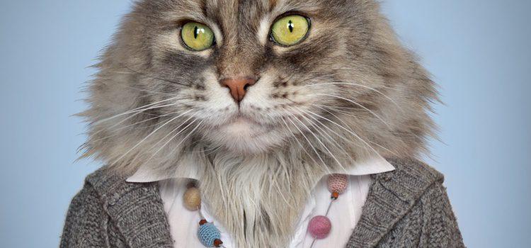 Antes de vestir a nuestra mascota simplemente por moda debemos asegurarnos de su comodidad