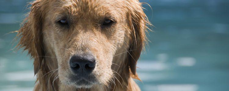La esperanza de vida de un perro va de 8 a 15 años