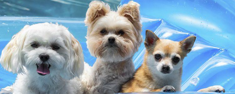 Busca los lugares más refrescantes para tu perro