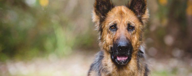 Mantén a tu perro activo para que no vaya a más