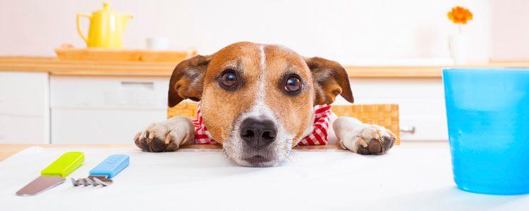 Hay que tener en cuenta factores como la edad, la raza, la medida y la salud del perro