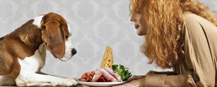 Debemos siempre darle su comida antes de comer nosotros