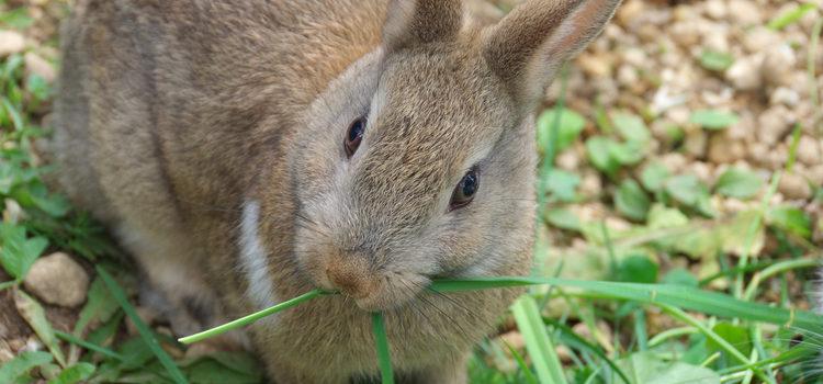 El conejo debe seguir una dieta equilibrada en su día a día