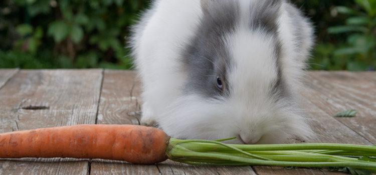 Los conejos necesitan comer lo máximo posible de verduras y frutas de color verde