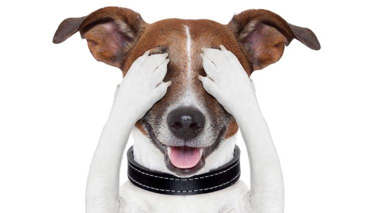 Los perros no solo utilizan el sentido de la vista