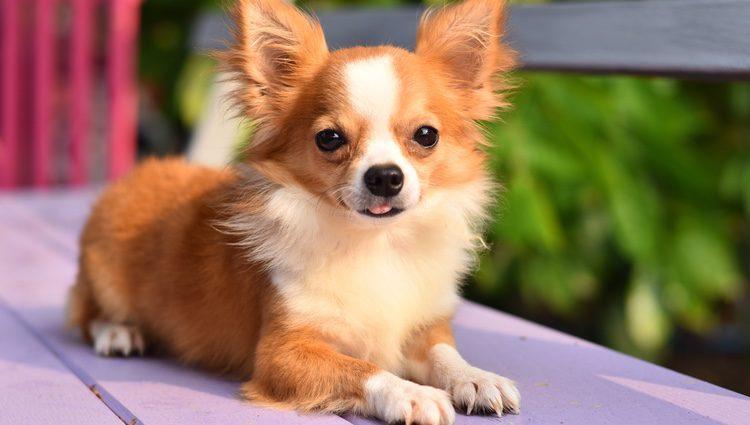 Si tu mascota es pequeña no le pegaría un nombre como 'Brutus'