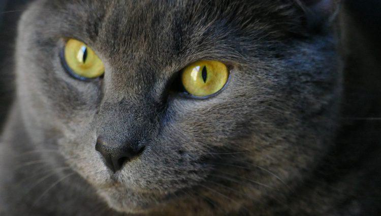 Sus ojos son de un llamativo color cobrizo