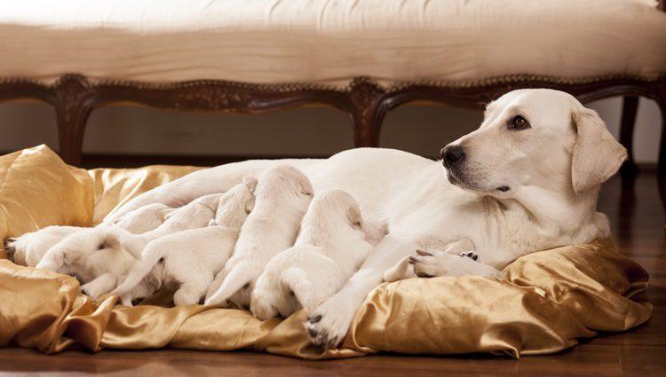 Es necesario llevar urgentemente a la madre y a los cachorros al veterinario