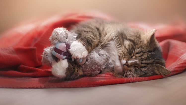 Uno de los primeros síntomas que notarás es que duerme más que de costumbre