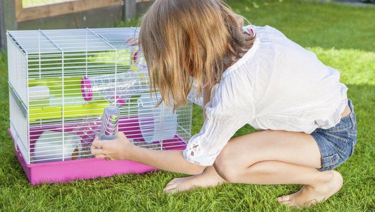 Tienes que desmontar toda la jaula para asegurarte de que quede completamente limpia