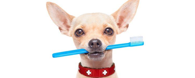 Hay que hacerle lo antes posible una limpieza de boca