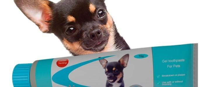 Cuando llevemos nuestra mascota al veterinario, el profesional de la salud canina determinará cuál es el estado del diente