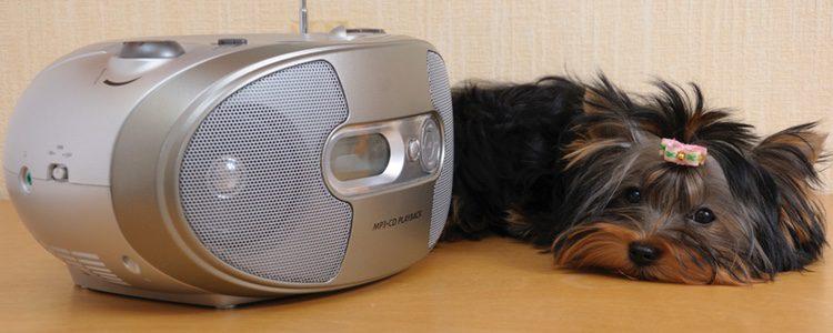 Algunas protectoras animales conocen el beneficio de la música clásica entre los perros y se la ponen también de fondo cuando los animales se encuentran en sus jaulas