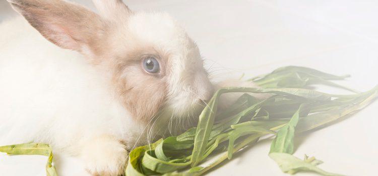 Dependiendo de la raza o el tipo de conejo que tengas tendrá un tipo de pelo u otro