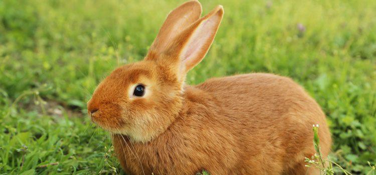Los conejos son muy sensibles a las condiciones climatológicas