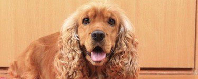 Te encantará saber que hay hoteles a los que puedes acudir con tu perro