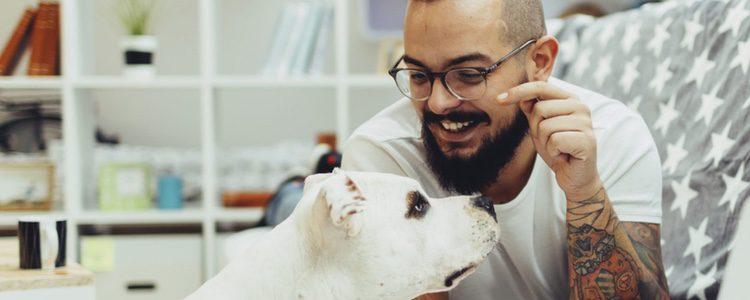 Hay hoteles por toda España a los que puedes acudir con tu perro. Tan solo infórmate
