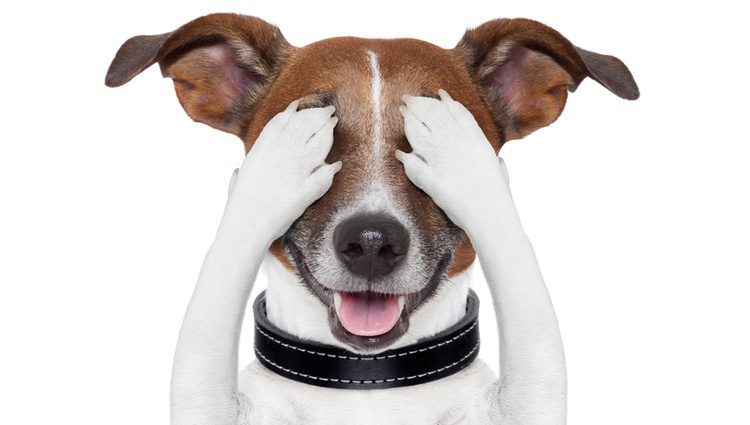 Conviene acostumbrar a tu perro a tu cámara, a su sonido y al flash
