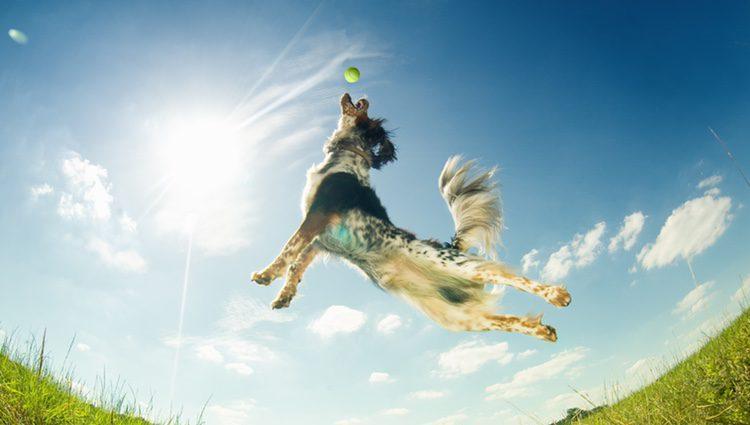 Puedes engañar a tu perro lanzándole una pelota para que tras la foto salga corriendo