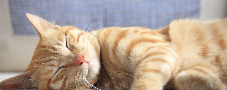 La creencia de que los gatos son animales nocturnos no es del todo cierta