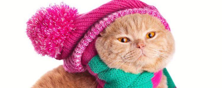 Los cuidados de los gatos frente al frío