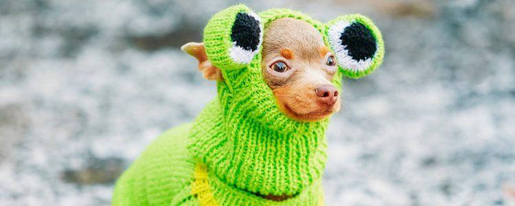 Proteger a los perros del frío con abrigos es ya una asentada moda