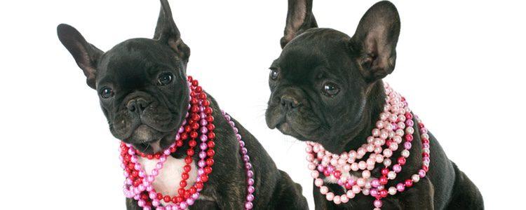 Tú mismo puedes elegir las joyas que luce tu perro