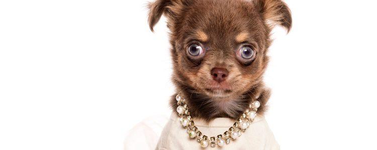 Las joyas pueden hacer sentir incómoda a tu mascota