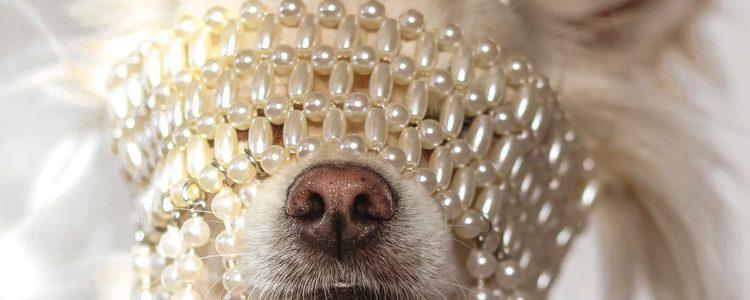 Deberás estar pendiente de tu perro si le pones joyas