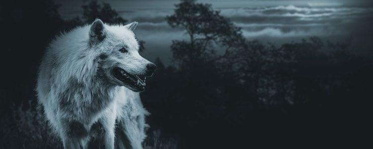 Son muchas las similitudes entre perro y lobo