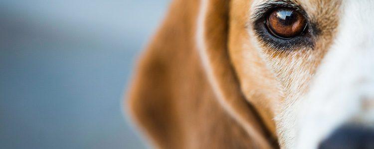 Nuestro perro puede mostrarse más nervioso con la luna llena
