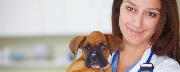El veterinario es nuestro gran aliado