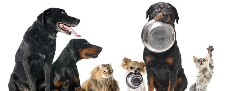 Los perros con intolerancia al gluten comen cosas especiales