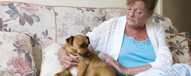 Acariciar a tu perro es también una forma de tranquilizarlo