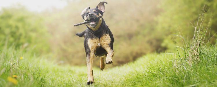 Si tu perro hace mucho ejercicio, llegará más relajado a casa