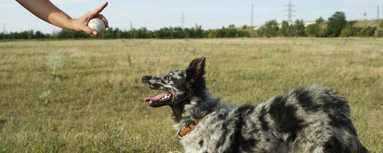 Los entrenadores caninos son una buena opción para que nuestro perro mejore