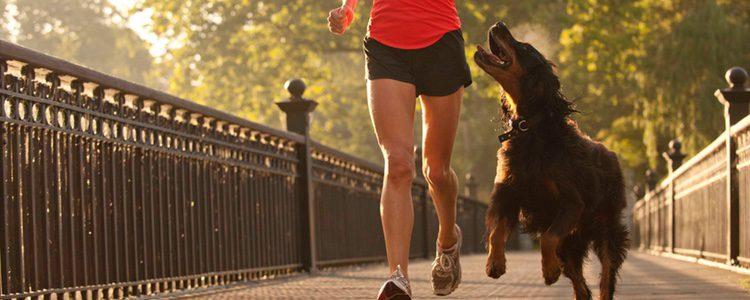 Tu perro será una buena excusa para salir a correr