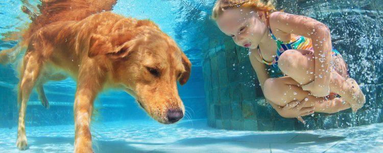 No obligues a tu perro a que se mete al agua, id poco a poco