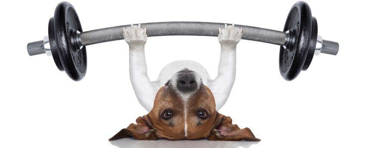 Puedes interactuar con tu perro mientras haces abdominales