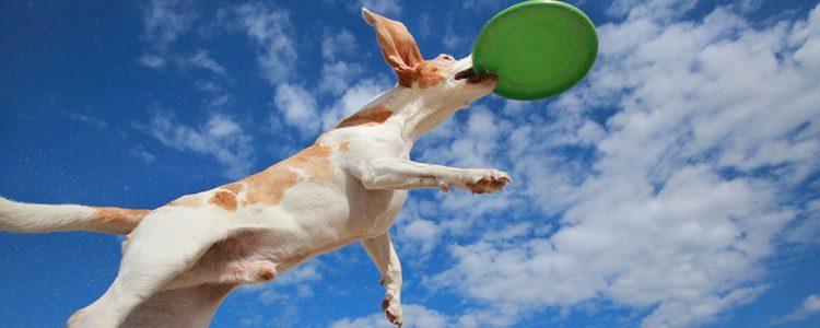 El frisbee es otra buena opción para jugar con tu perro